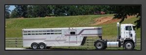 Mule Trailer E C R BC Web DSC06253